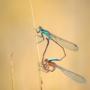 Макро фото насекомых высокого разрешения — макросъемка природы