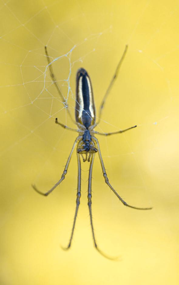 фото насекомых (2)