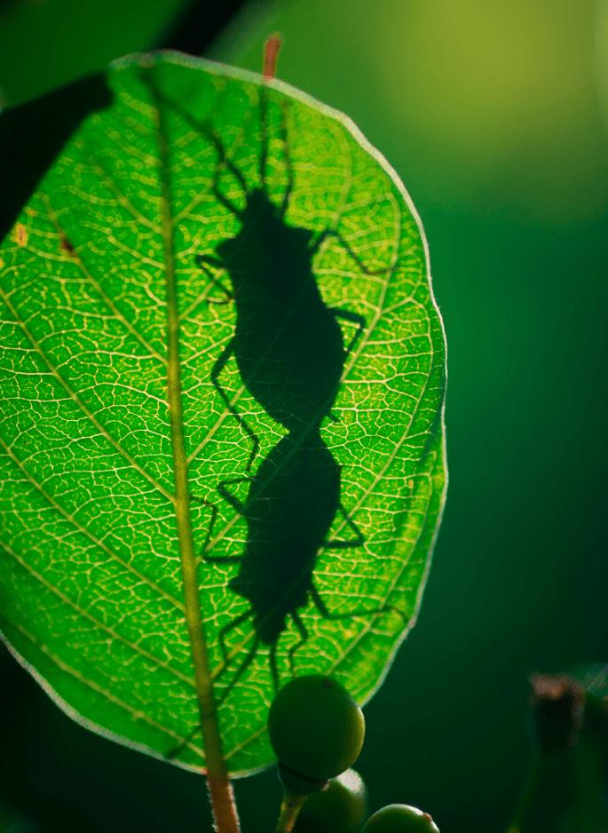 фото насекомых (3)