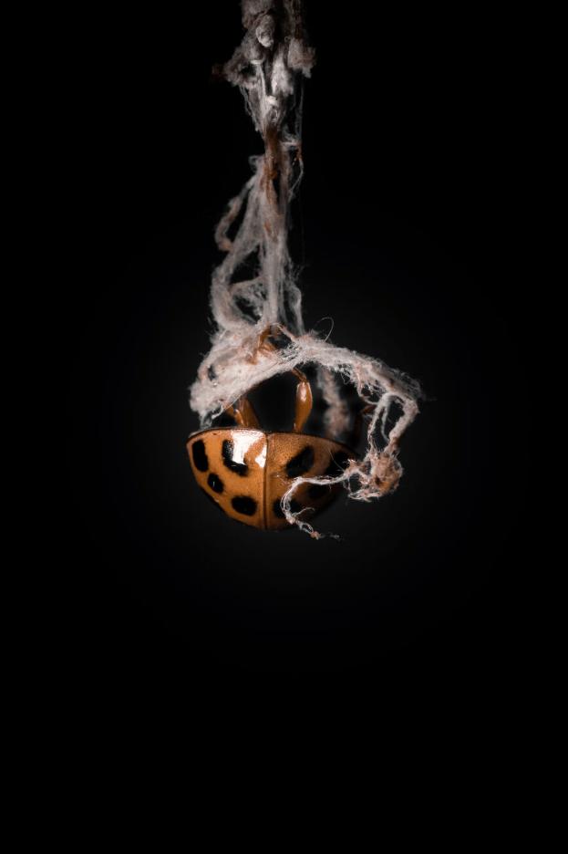 фото насекомых (4)