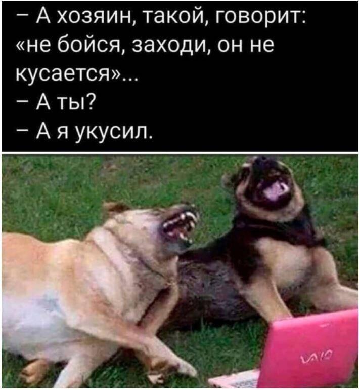 смешные картинки с надписями (7)
