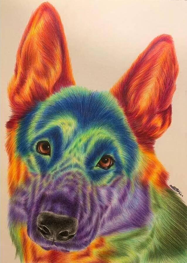Животные карандашом (2)