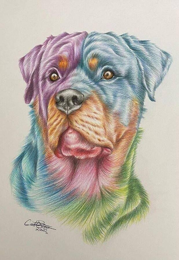 Животные карандашом (8)